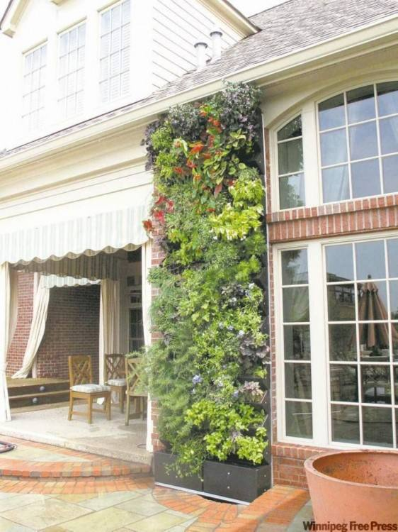 living wall outdoor