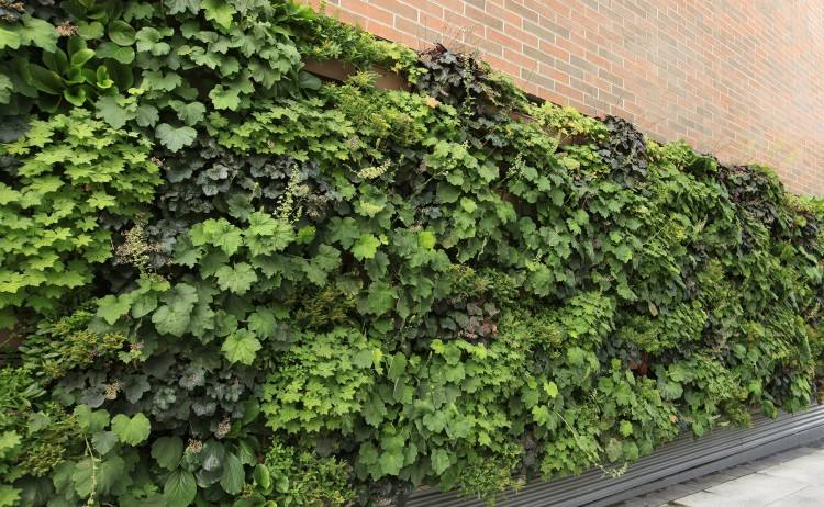 outdoor plant wall plant on walls absolutely ideas living wall systems together with suite plants walls